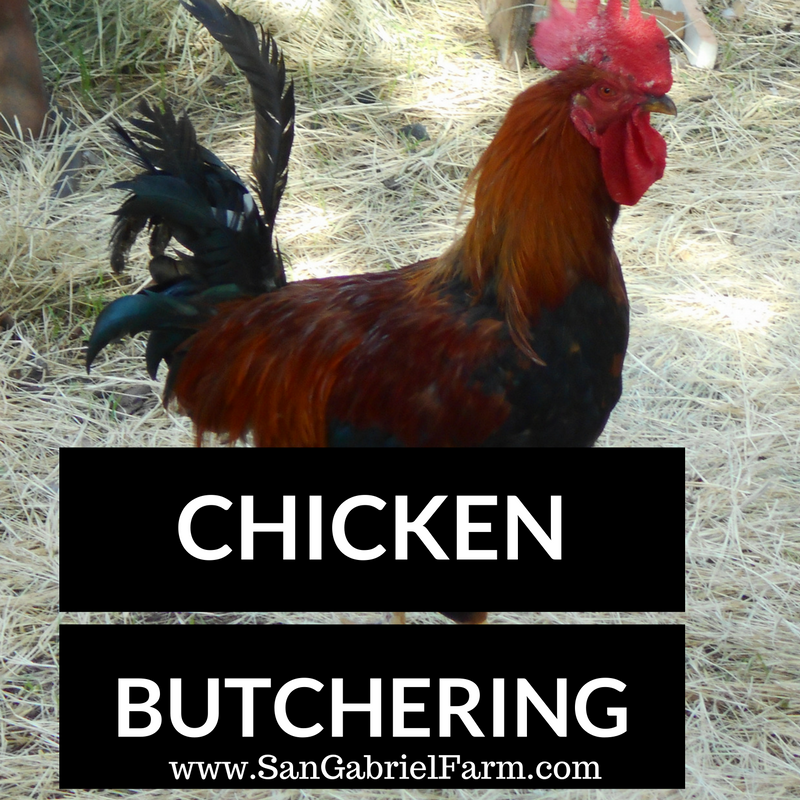 chicken butchering
