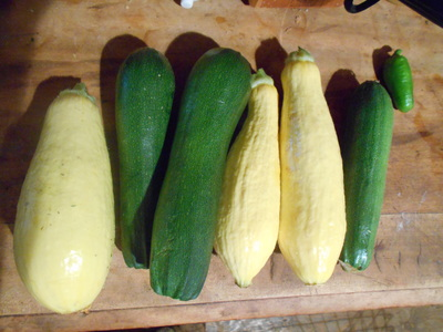 9 ways to use excess zucchini