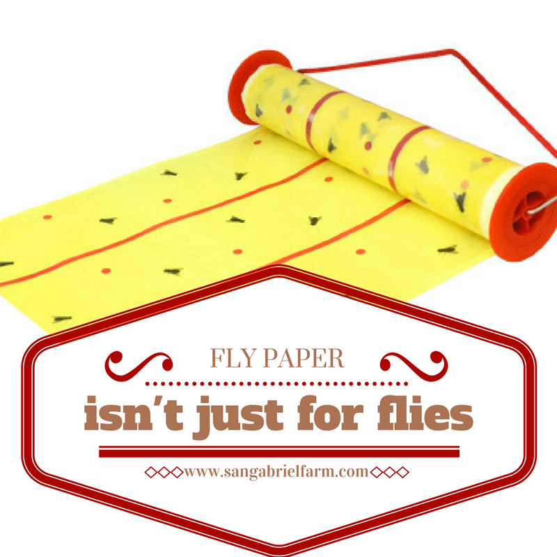 fly paper isn't just for flies