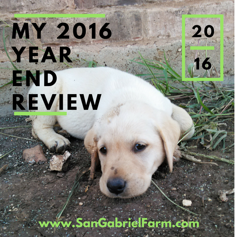 my 2016 year end review