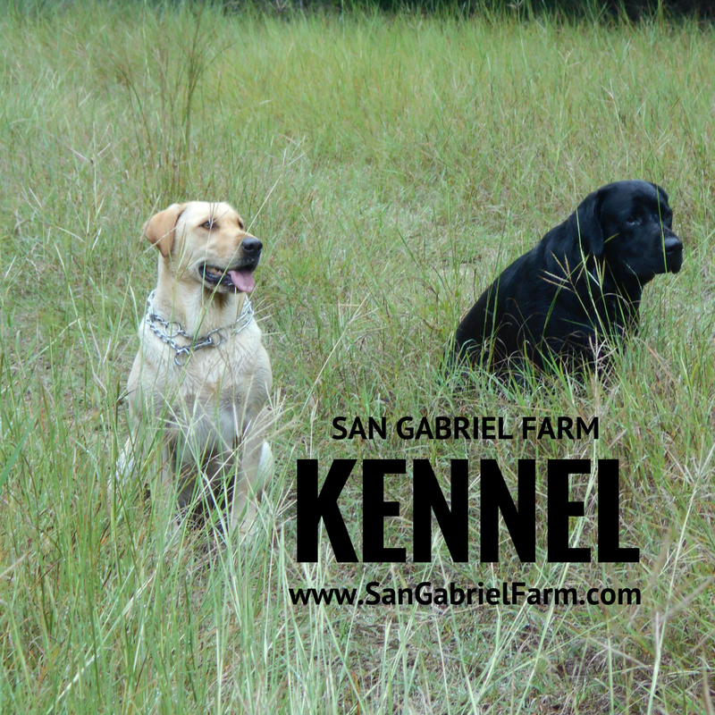 SAN GABRIEL FARM kennel