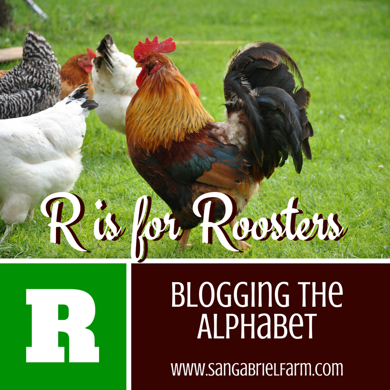 r is for roosters